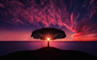 peace tree.jpg